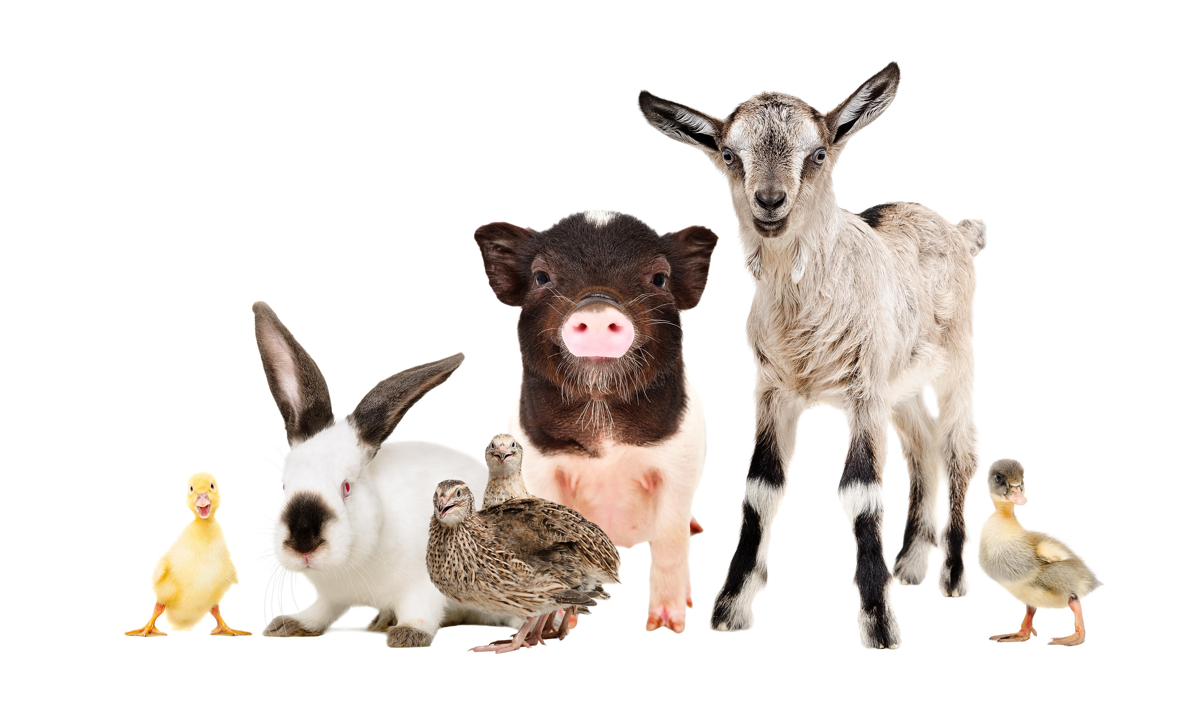 Товары для с/х животных