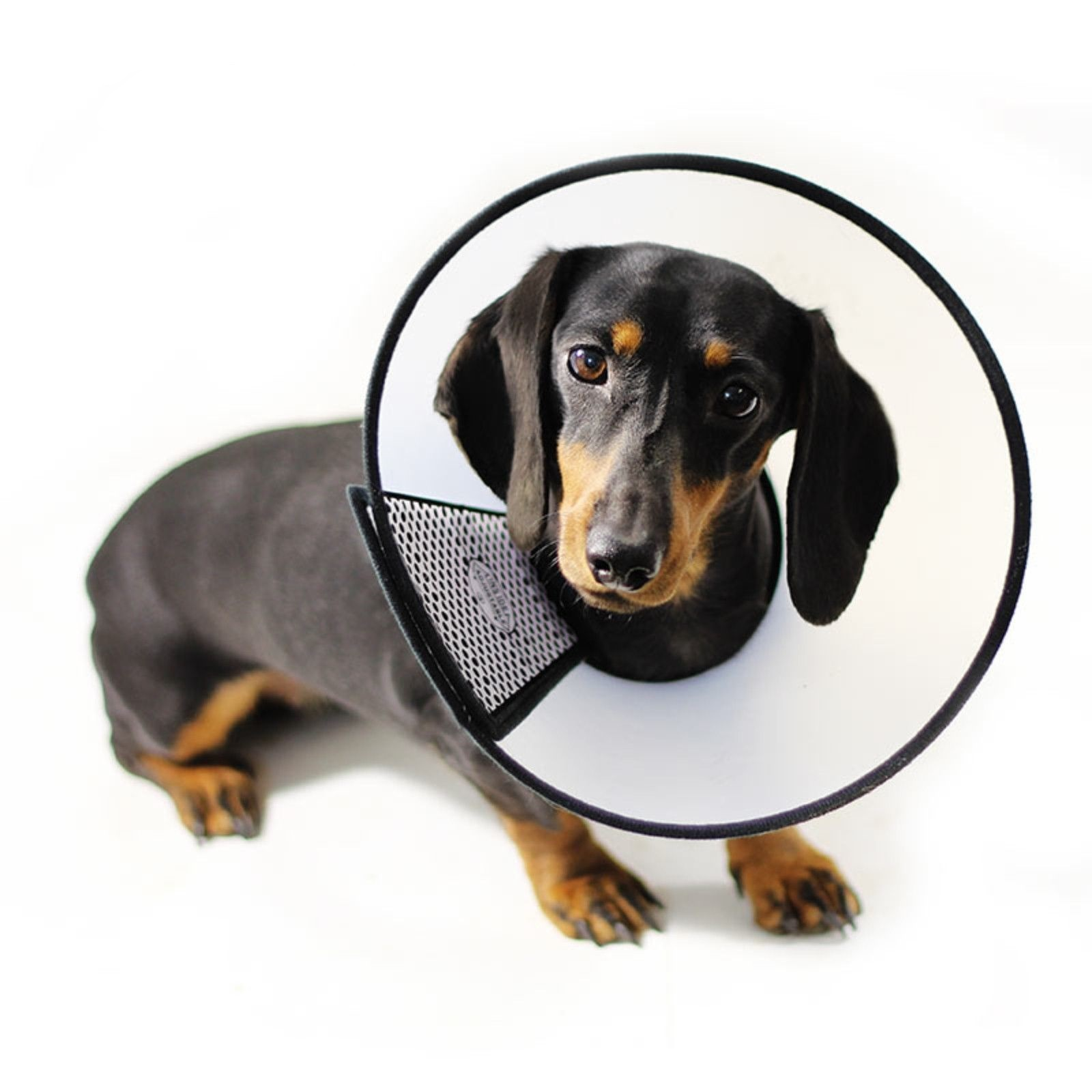 Товары для реабилитации животных