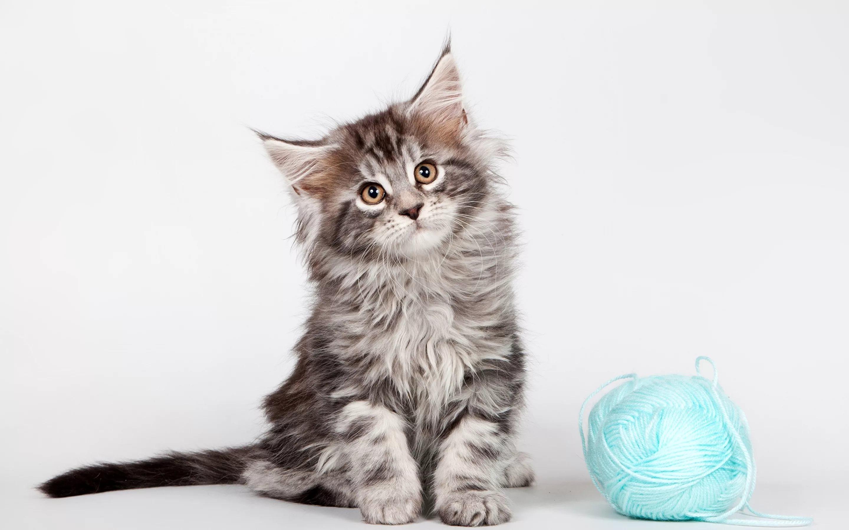 Для крупных котят