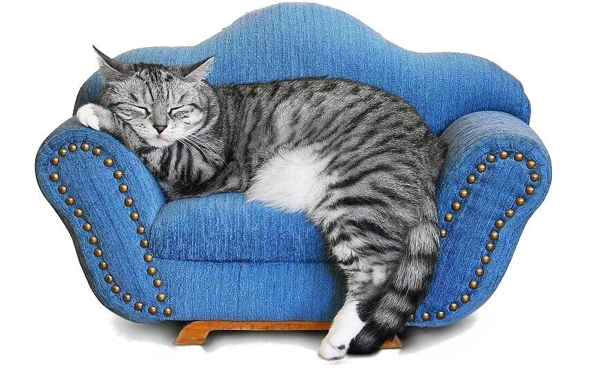 Домики и лежаки для кошек