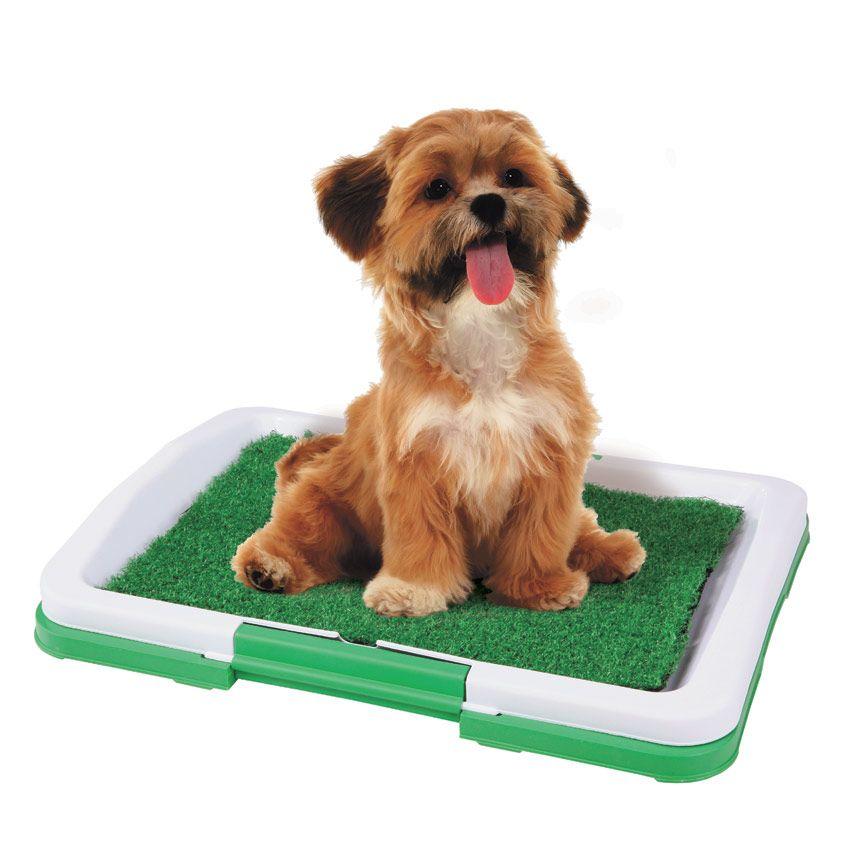 Туалетные принадлежности для собак