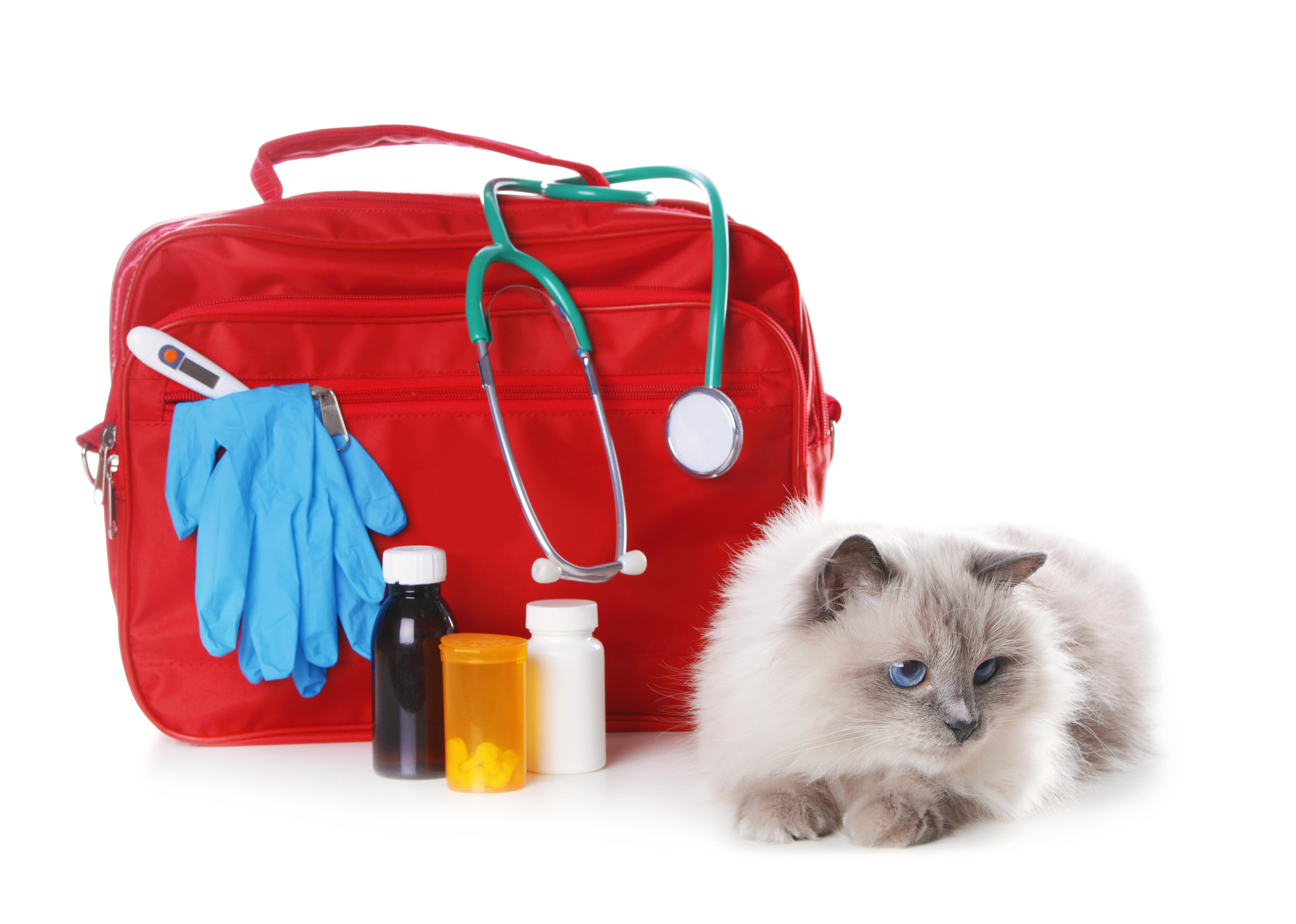 Лекарственные средства для животных