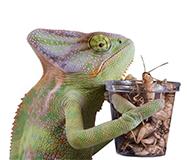 Корма и витамины для рептилий