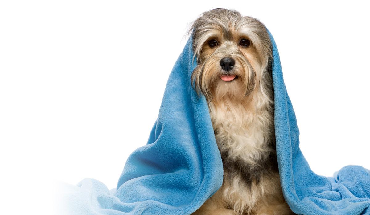 Гигиена и уход для животных