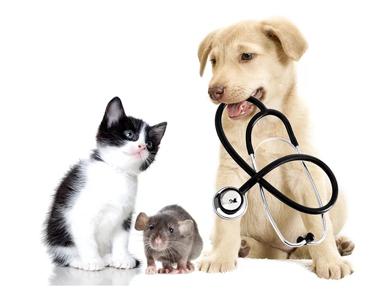Ветеринарные средства
