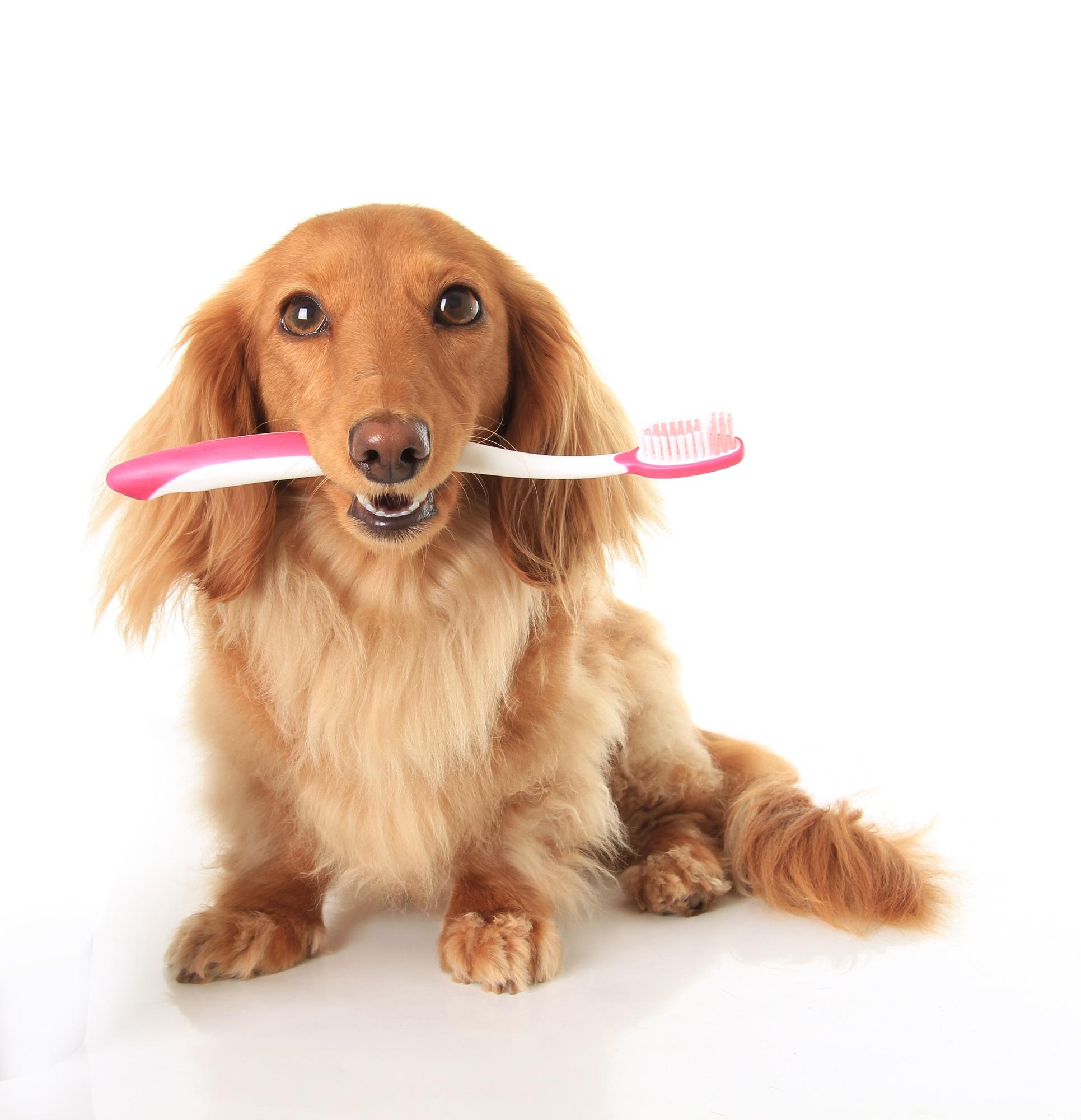 Средства по уходу за полостью рта животного