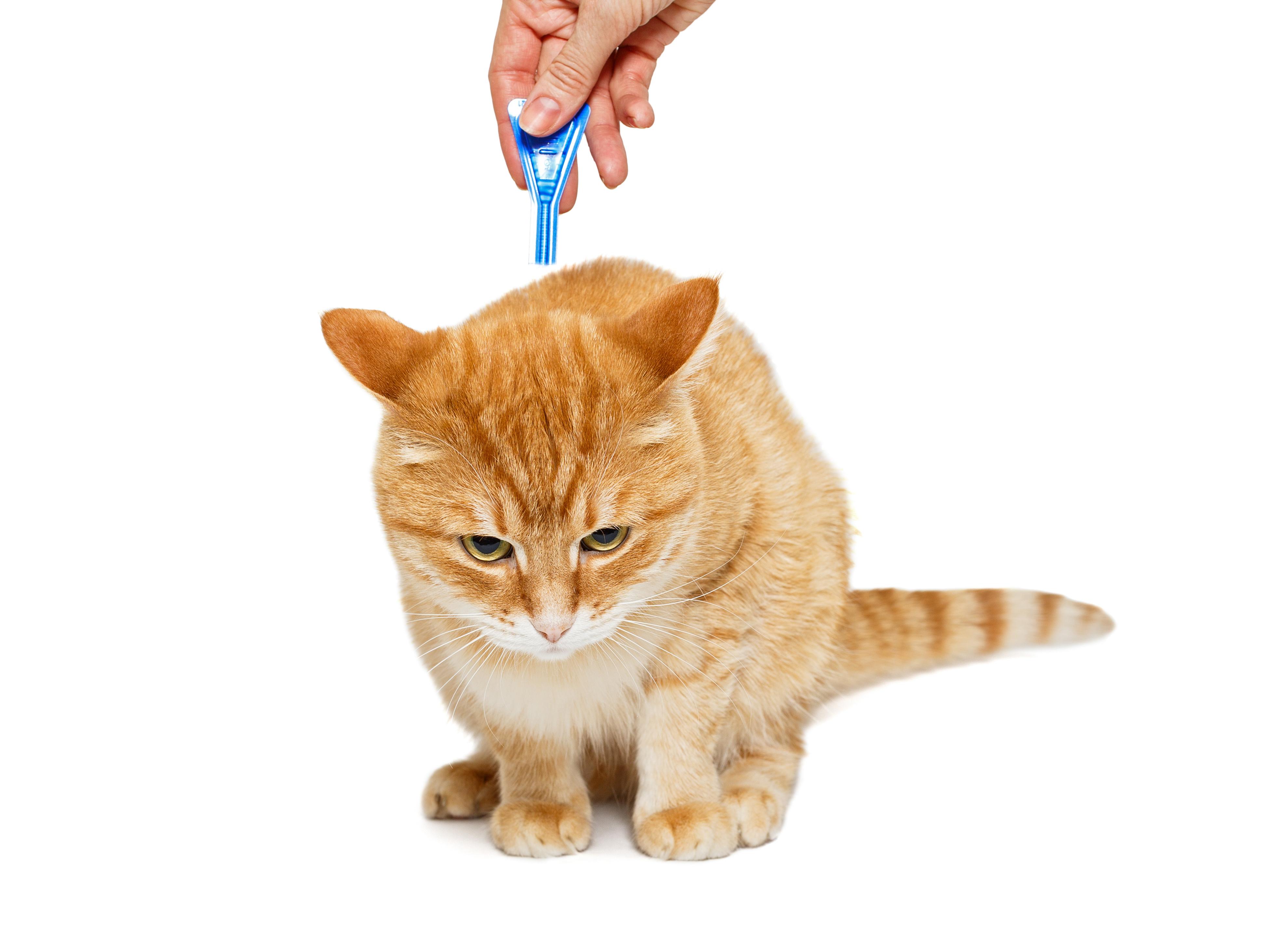 Противопаразитарные средства для животных