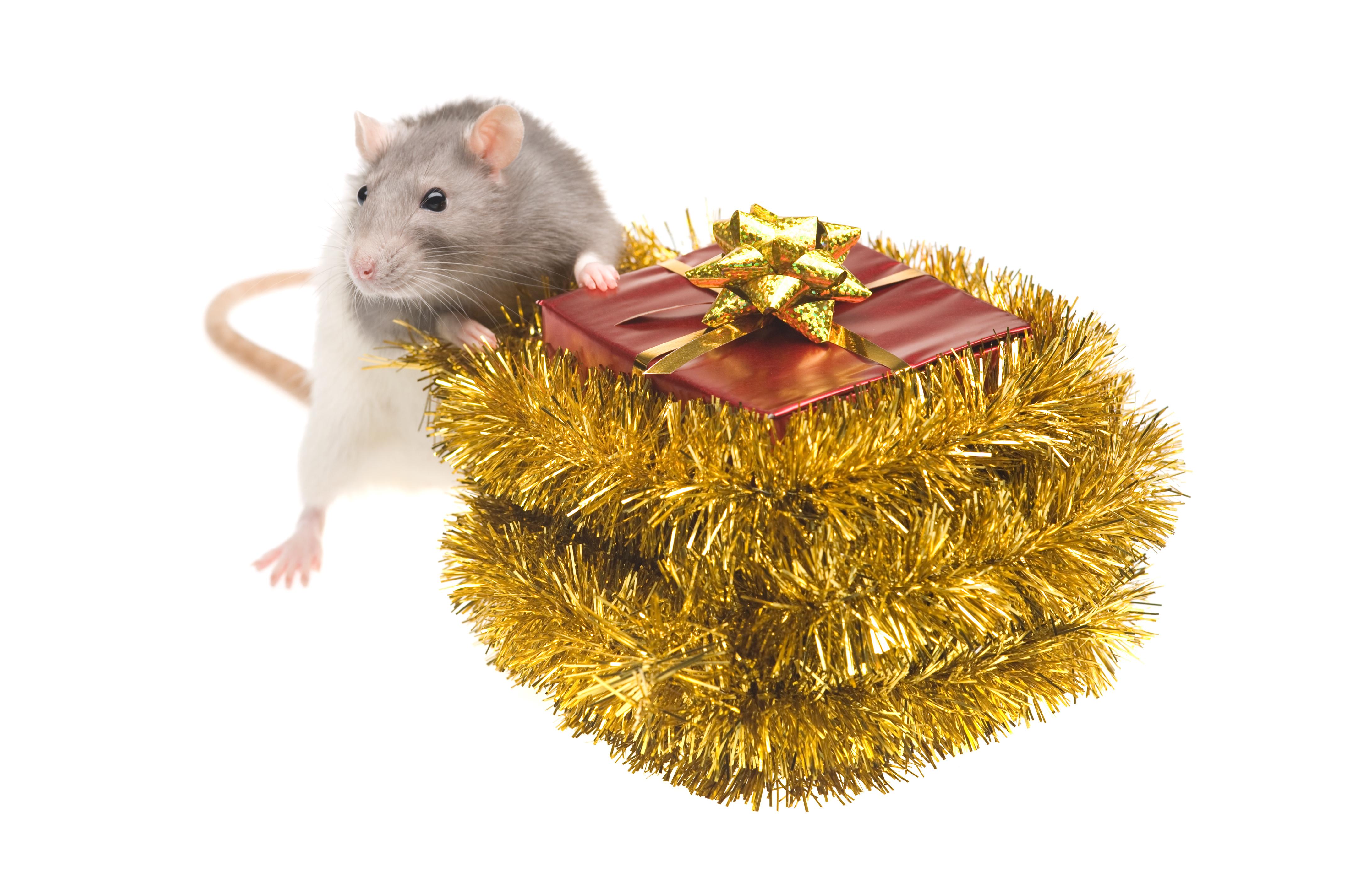 Подарки для грызунов