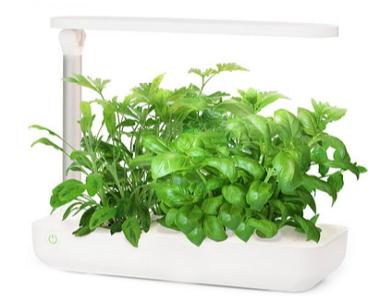 Фермы для растений
