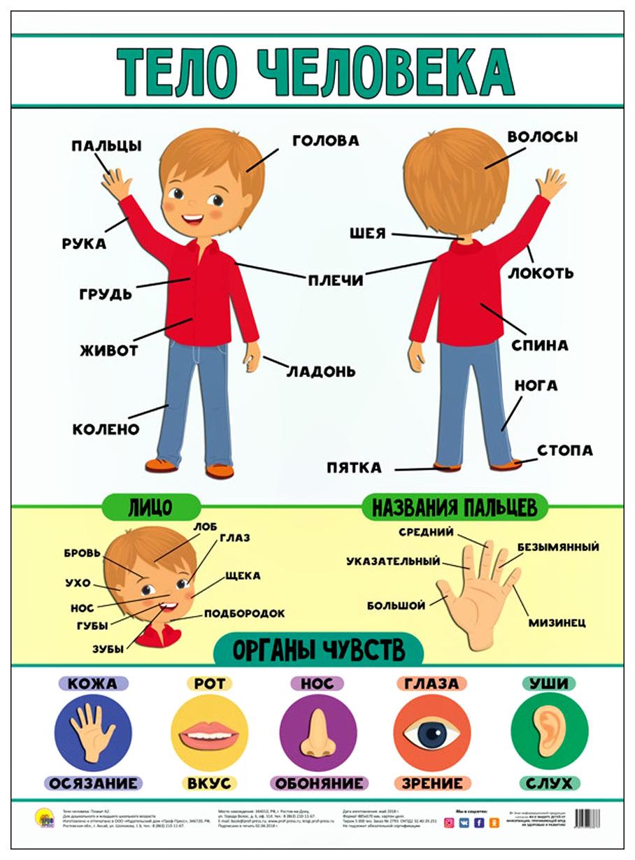 Картинка тело человека для детей