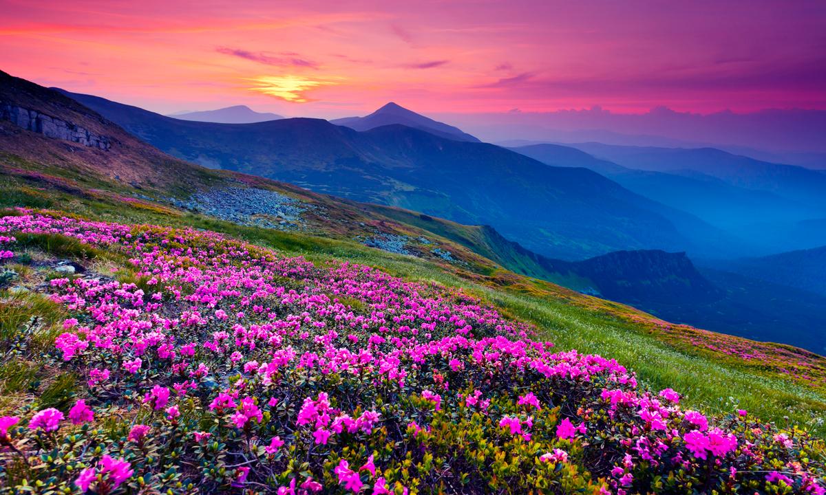 картинки лето цветы горы вот для
