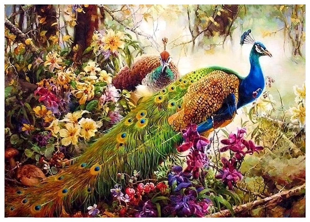 картинки красивые картинки с павлинами и попугаями хищник предлагает купить