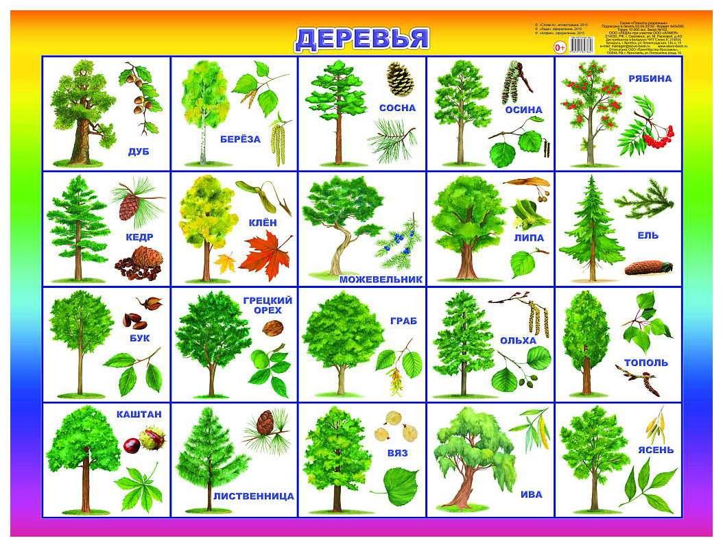 лиственные деревья россии фото и названия часть пляжей города