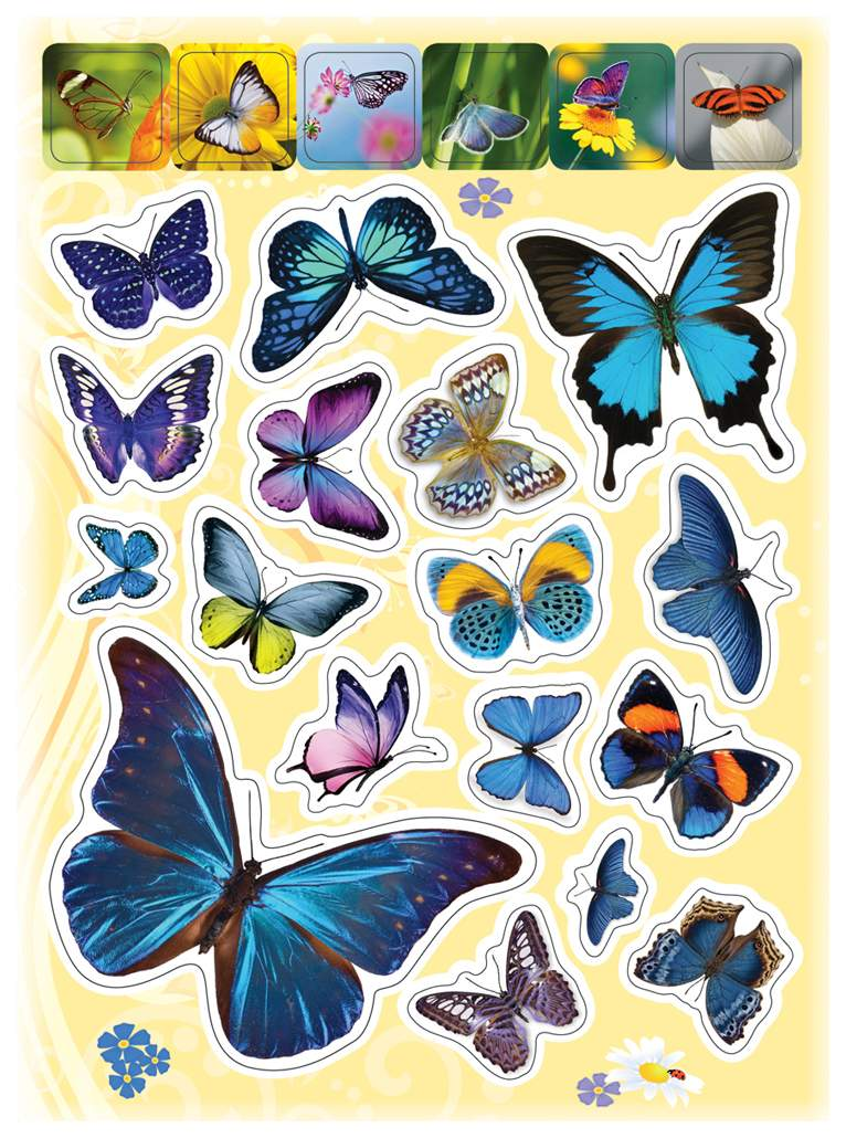 Руководителя, картинки много бабочек для детей
