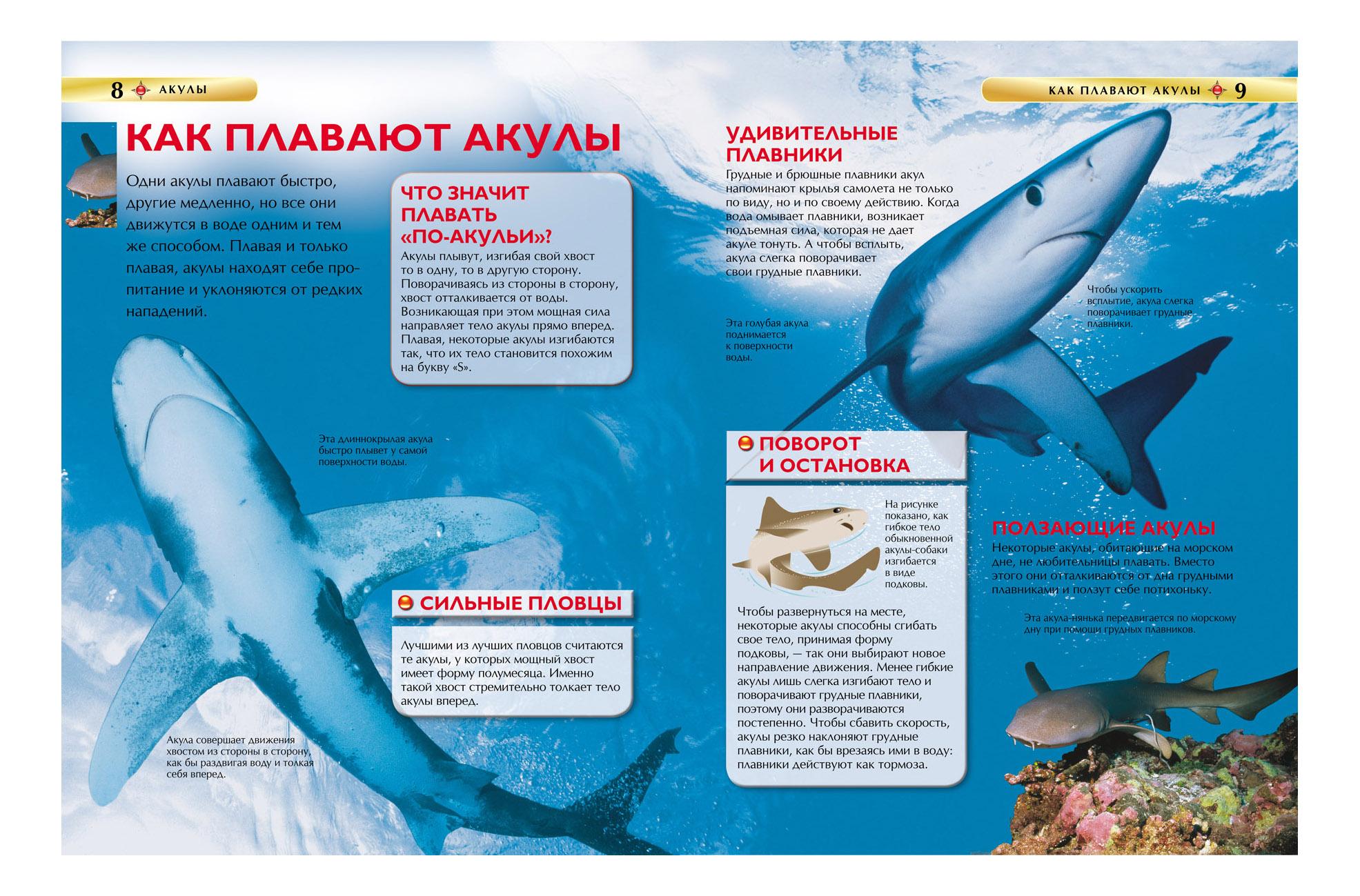 парит картинка акулы и описание супонево лайф это