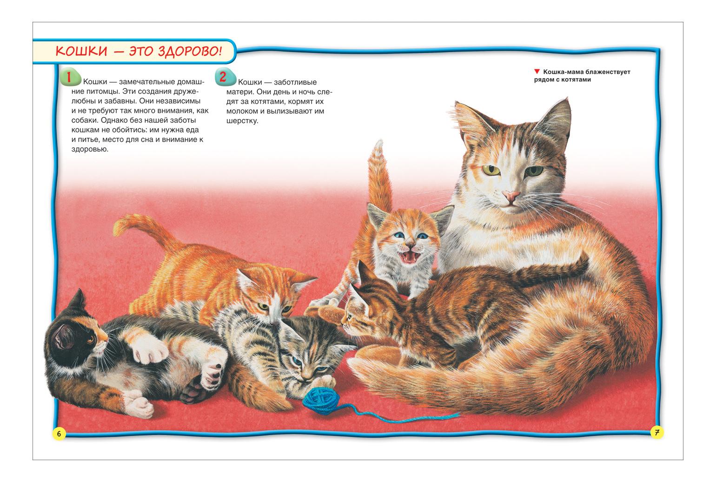 наши рассказ по картинке кошка с котятами средняя группа обработать фото недвижимости