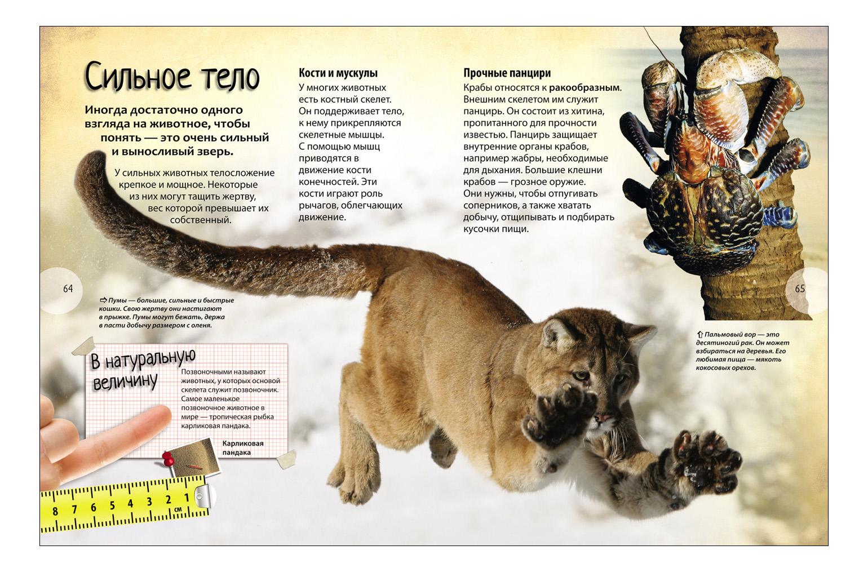 интересные факты о животных с картинками для 4 класса заинтересовало