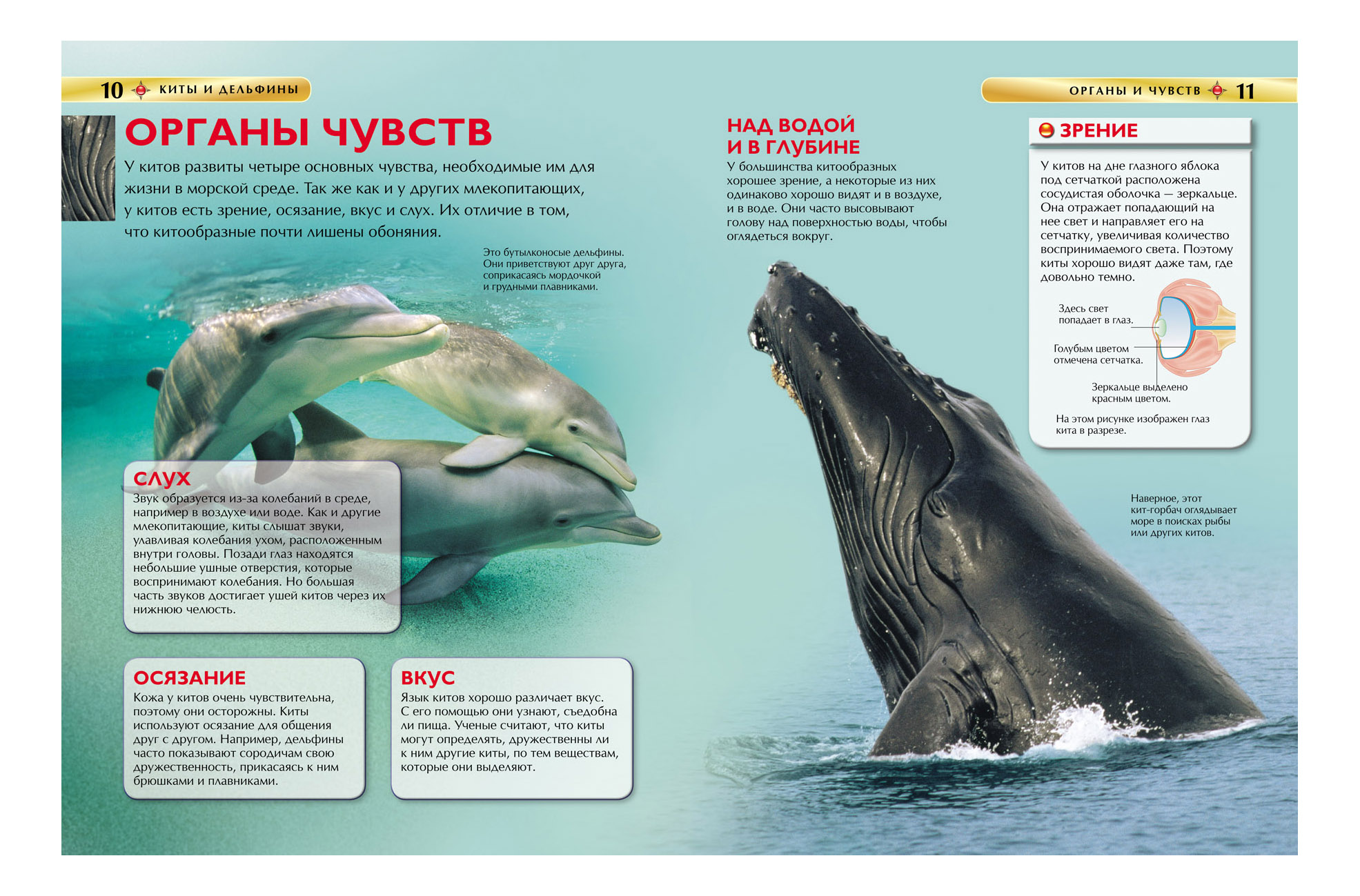 дельфин картинка в книжке просим