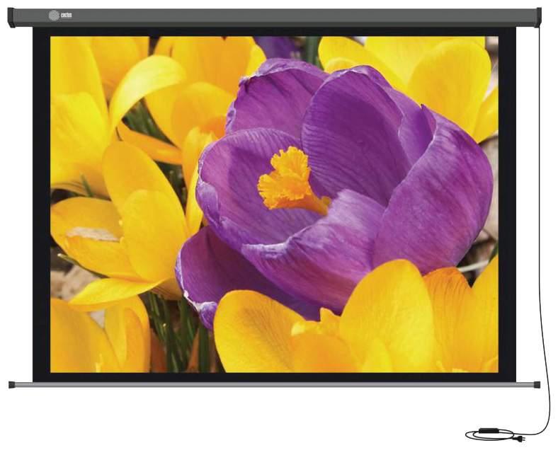 Экран для видеопроектора Cactus Professional Motoscreen CS-PSPM-168X299