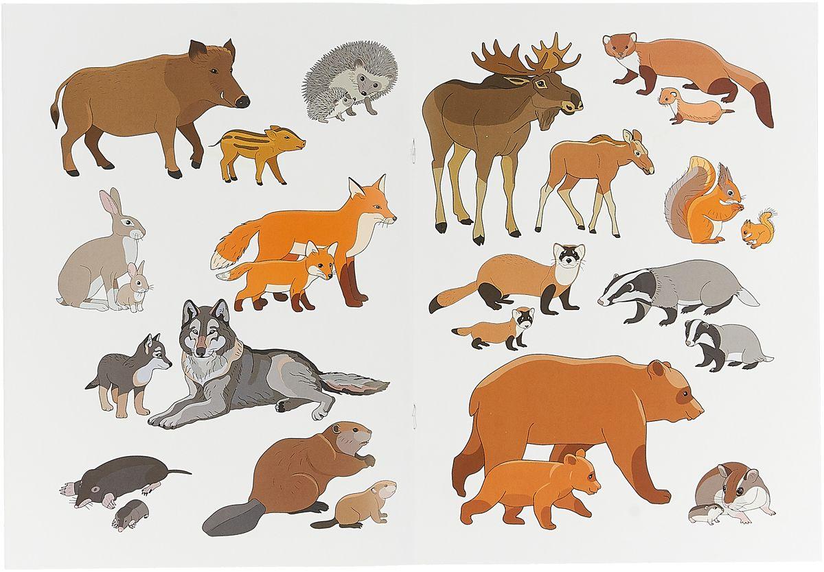 Картинки животных нашего леса для детей