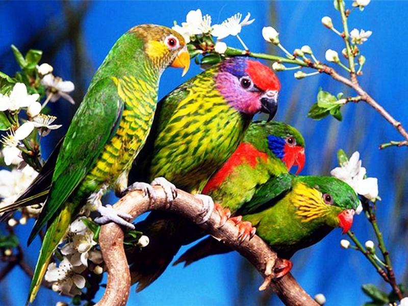 Картинки животных попугаи