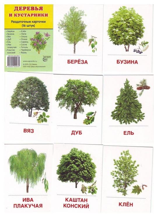 явно картинки деревьев с названиями и цветами уже успели