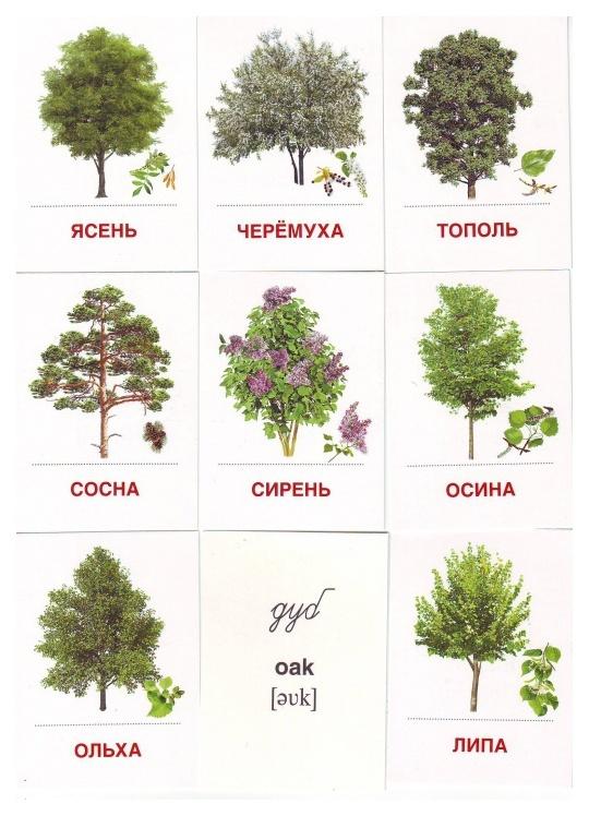 Деревья картинки для детского сада с названиями