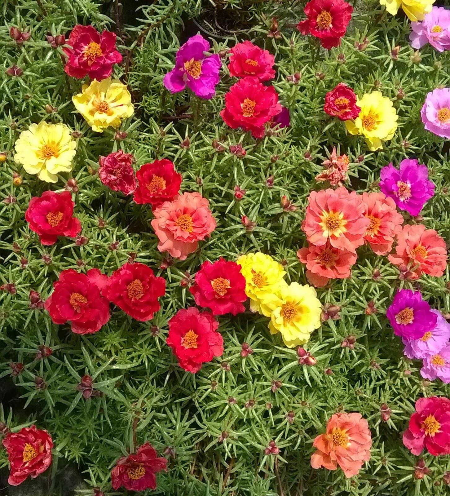 поздравления стихах полуденный жар цветы фото нас есть