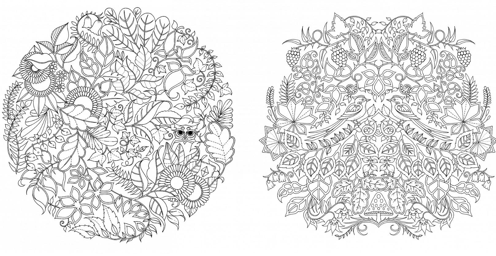 Раскраска джоанны басфорд зачарованный лес образцы раскраски, держатели настенных для
