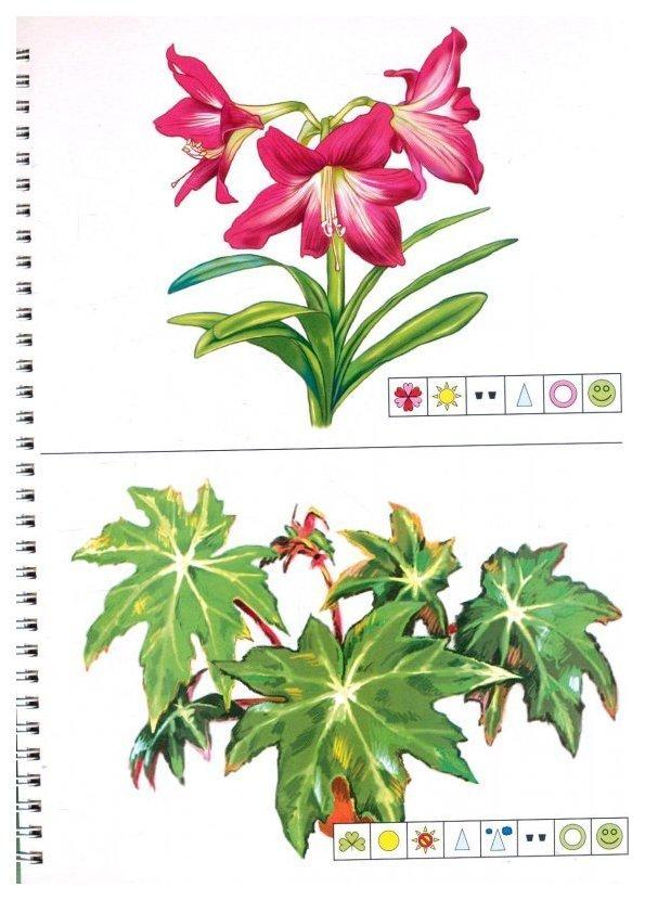 шиномонтаж разрезные картинки комнатные цветы кронштадте
