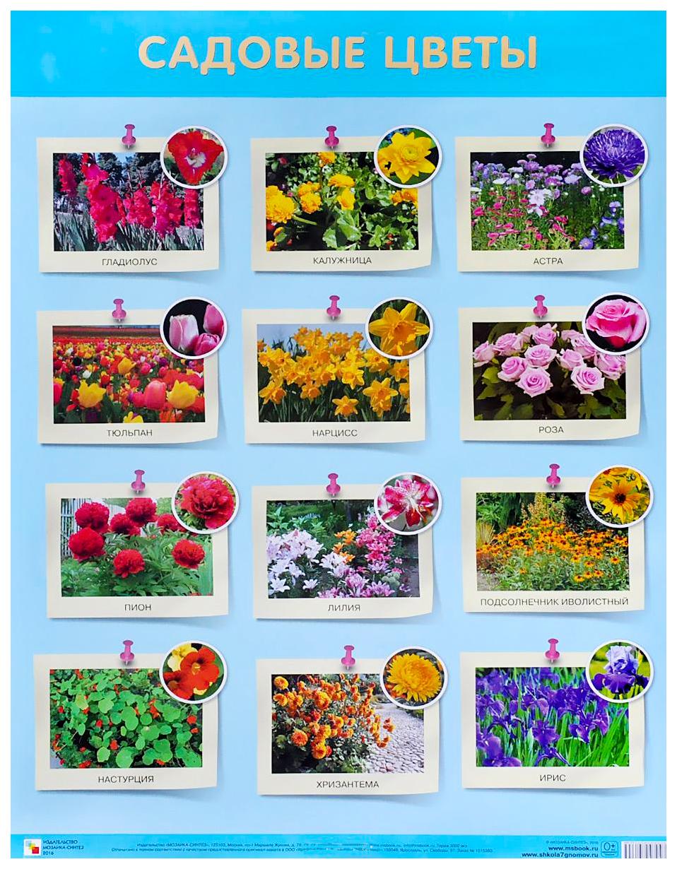 Садовые цветы с названиями картинки тарелке