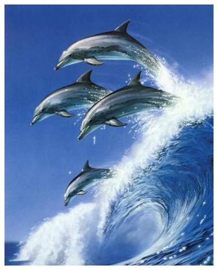 Дельфин на волне картинка