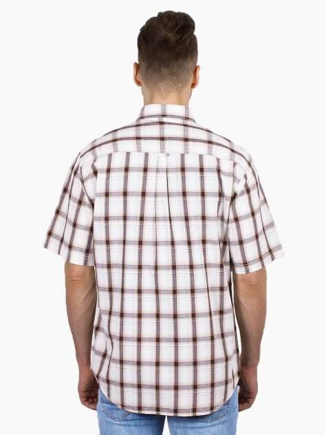 Рубашка мужская Dairos GD81100396 коричневая 4XL