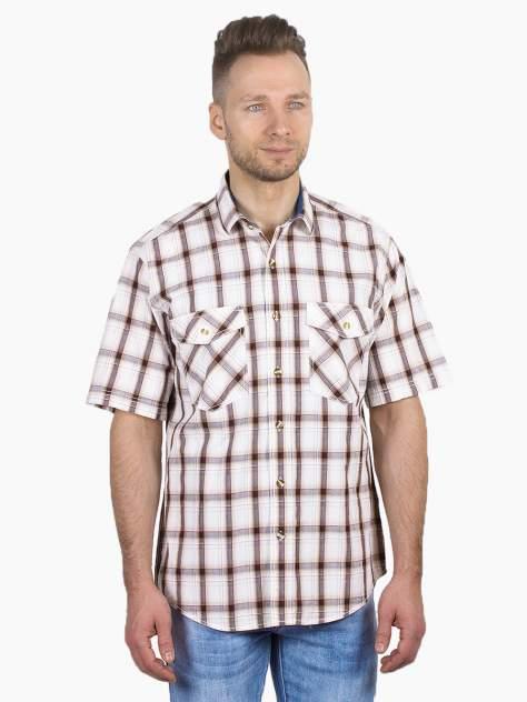 Рубашка мужская Dairos GD81100396 коричневая 3XL