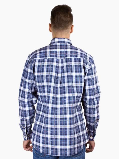 Рубашка мужская DAIROS GD81100369 синяя 4XL
