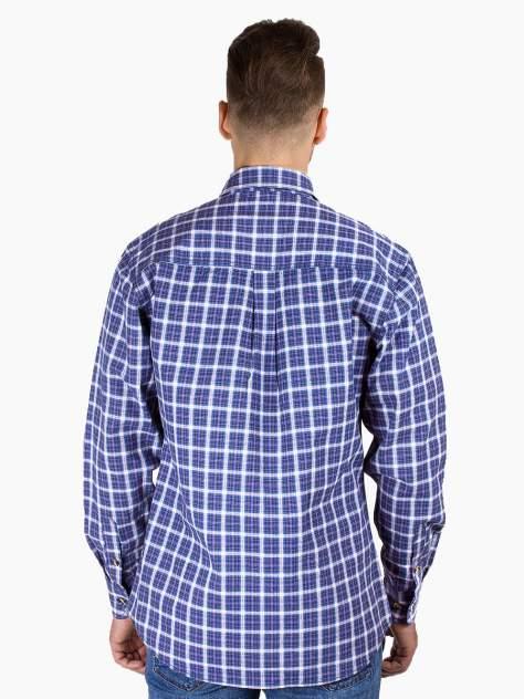Рубашка мужская Dairos GD81100368 фиолетовая 4XL