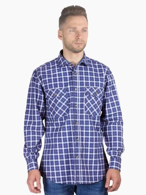 Рубашка мужская Dairos GD81100368 фиолетовая 3XL