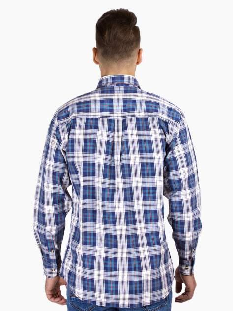 Рубашка мужская Dairos GD81100367 синяя 4XL