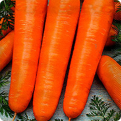 Семена Морковь Каротин Супер, 2 г, АЭЛИТА
