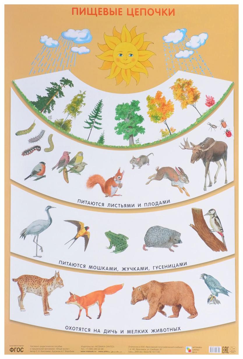 Купить Плакат «Пищевые цепочки», Мозаика-Синтез, Подготовка к школе