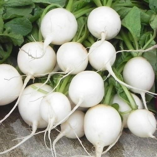 Семена овощей Первые семена Редька Зимняя круглая