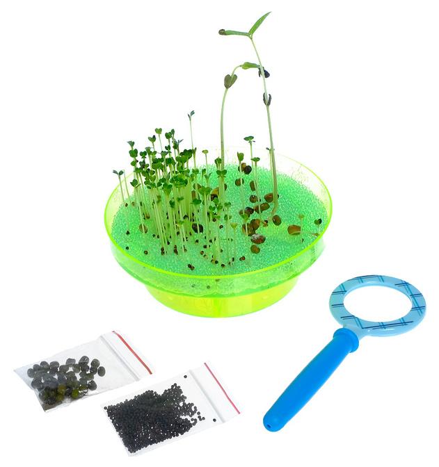 Купить Набор для опытов «Выращиваем растение»: лупа, семена, тарелка, губка Эврики, Наборы для опытов
