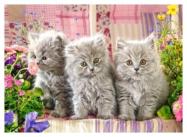 Купить Пазлы B2-27491 Три серых котенка, 260 деталей MIDI Castor Land, Castorland