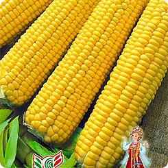 Семена Кукуруза Царевица, 5 г, Семена Алтая
