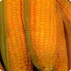 Семена Кукуруза Супер Супер Сладкая F1, 6 шт, Сибирский сад