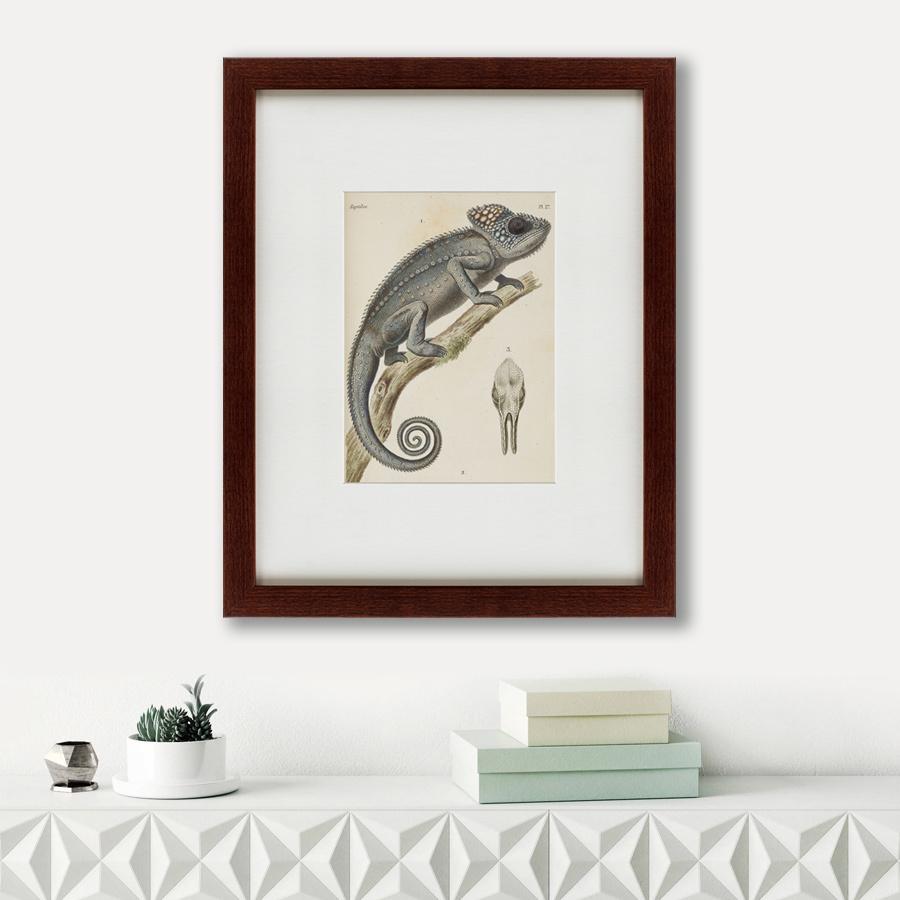 Литография Chameleon, 1706, 42х52см, Картины в Квартиру