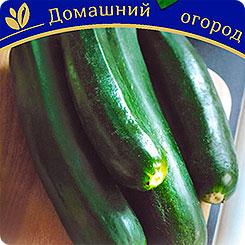Семена Кабачок Легкий сбор Зеленый F1,