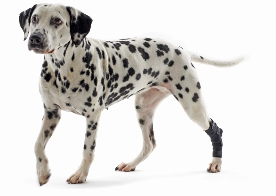 Протектор для собак Kruuse Rehab hock protector для скакательного сустава черный S.