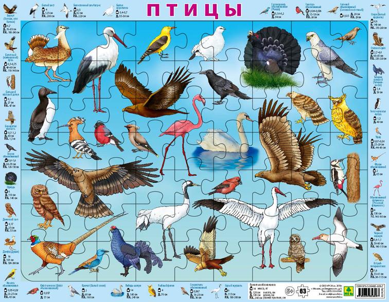 Птицы России. Детский пазл на подложке(36х28 см, 63 эл.)