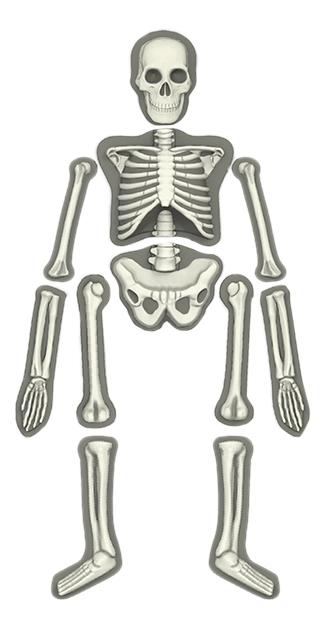 Набор для исследования 4M Юный врач. Скелет человека фото